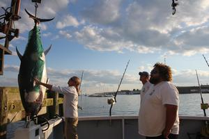 , MA, the Hot Tuna : First Mate Jarrett Przybyszewsk guides a tuna